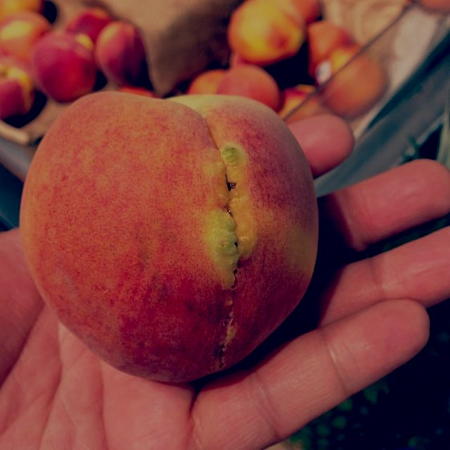 """FrankenPeach"" Looks like someone got stitched up just in time to be picked up at the market! Hop..."