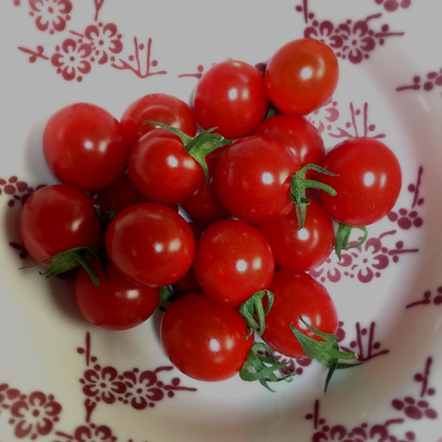 Best tomatoes of the season
