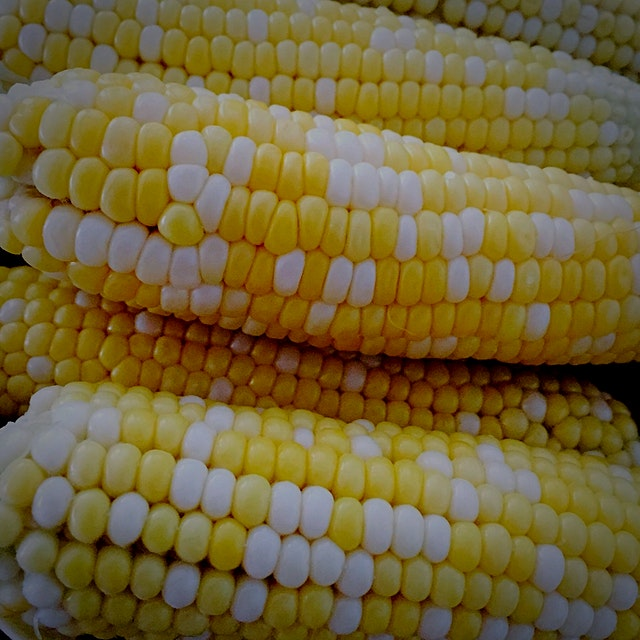 The corn is delicious this year! Got these babies out at one of the farms in Langley when we went...