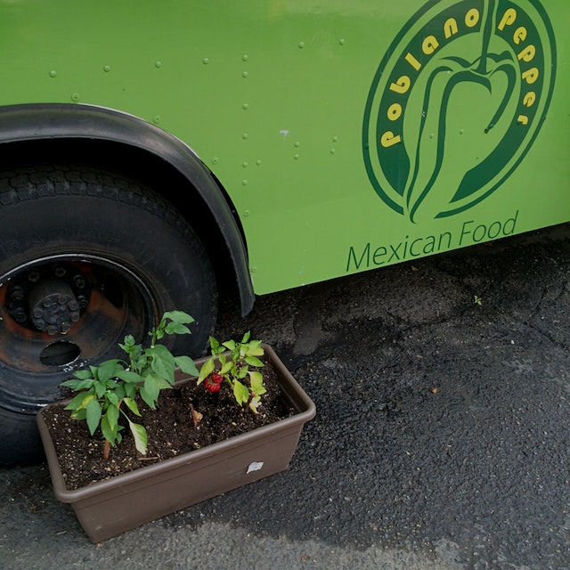 Growing their own peppers at the food trucks in Portland. Great breakfast burrito!