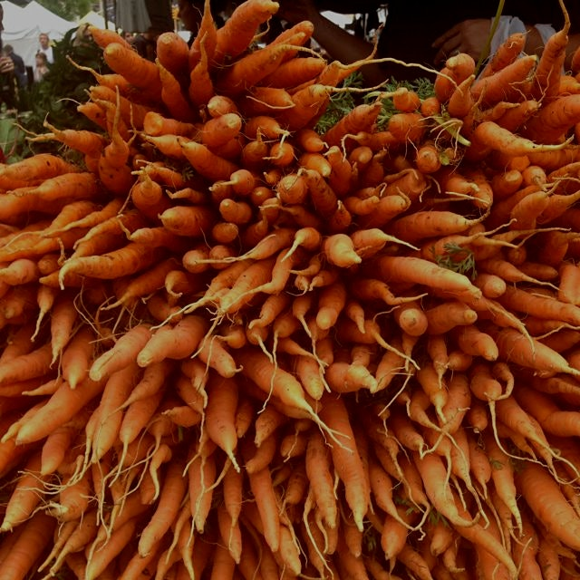 Carrots for miles @unsqgreenmarket
