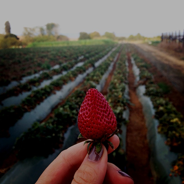 Pilgrimage to the ground zero of organic farming: the UC Santa Cruz Center for Agroecology and Su...
