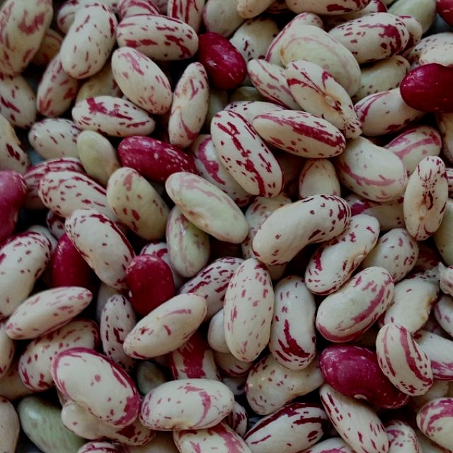 Cranberry beans ready for a boil!