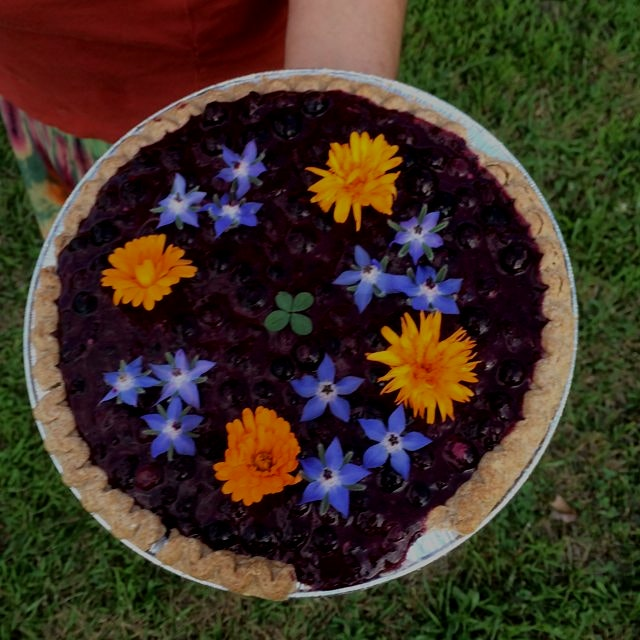 Raw blueberry pie with calendula and borage flowers -- a four leaf clover to boot.