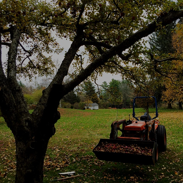 An orchard means apples for compost! #NoFoodWaste thanks to my trusty tractor Cassidy...
