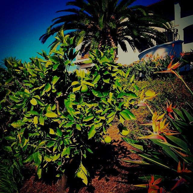 Lime anyone? California in November...
