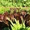 coraltreefarm