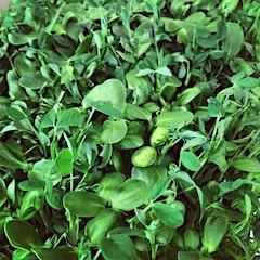 Greentopfarms
